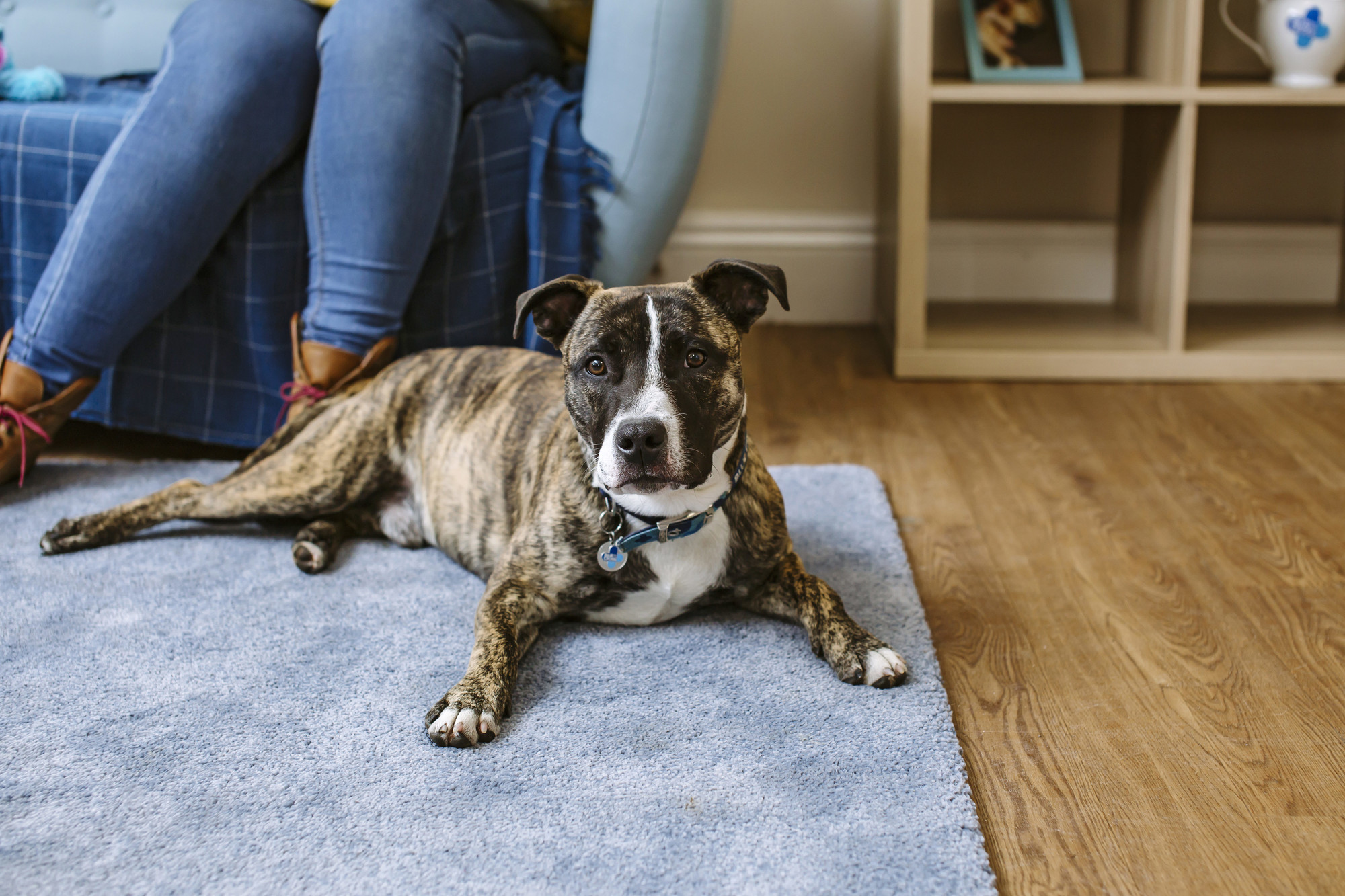 Kennel cough symptoms and treatment | Blue Cross
