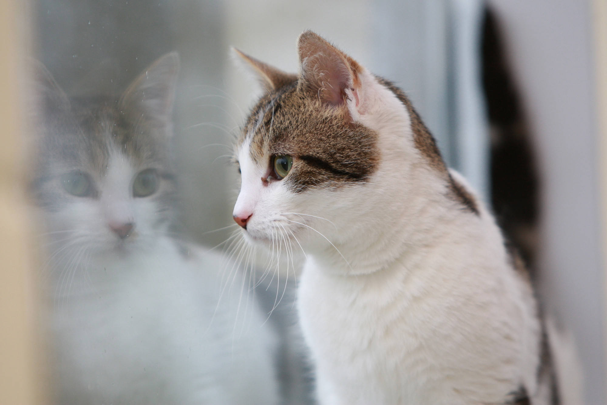 Feline immunodeficiency virus (FIV) | FIV cats | Blue Cross