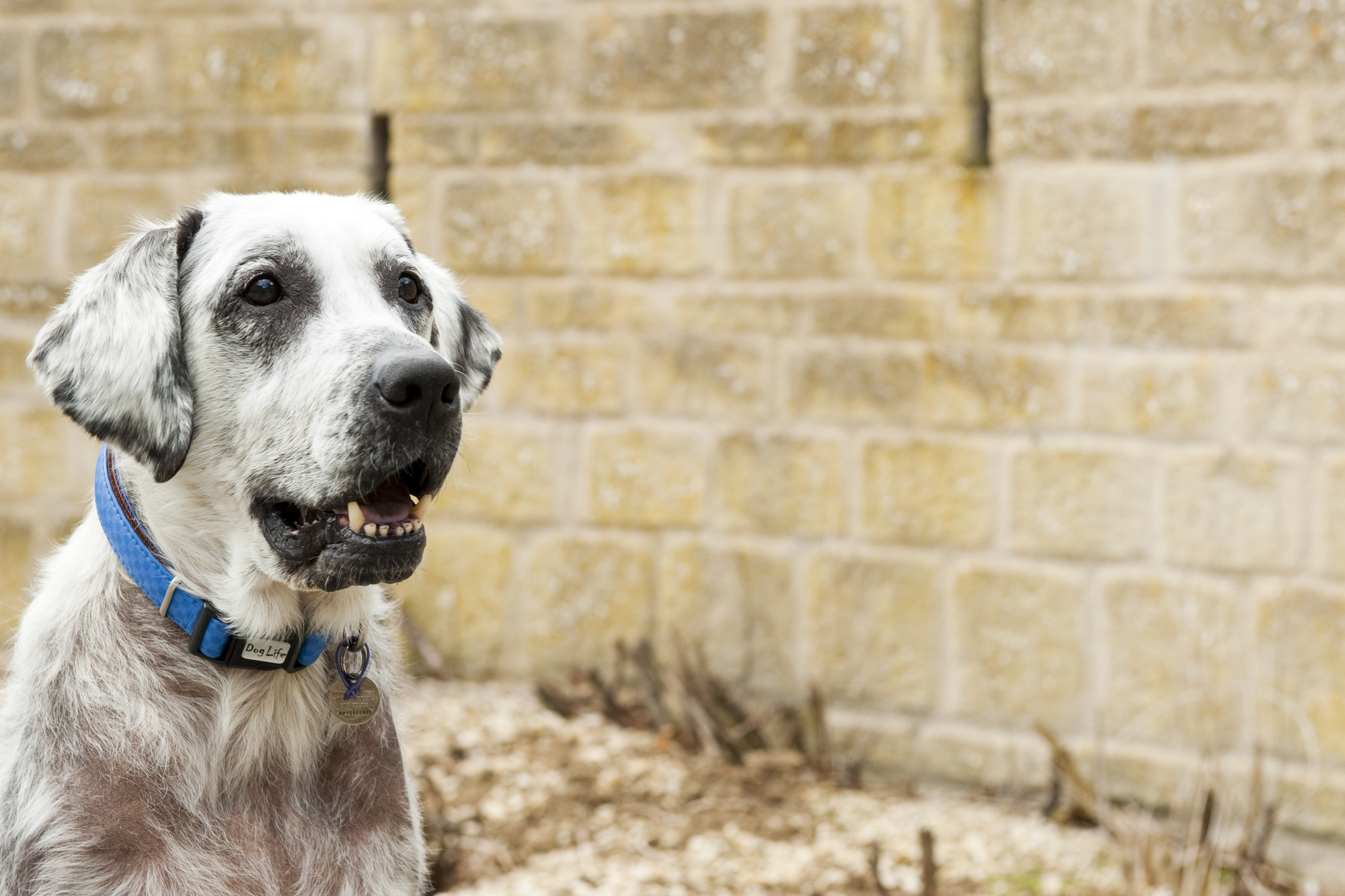 Caring for Older Dogs | Blue Cross