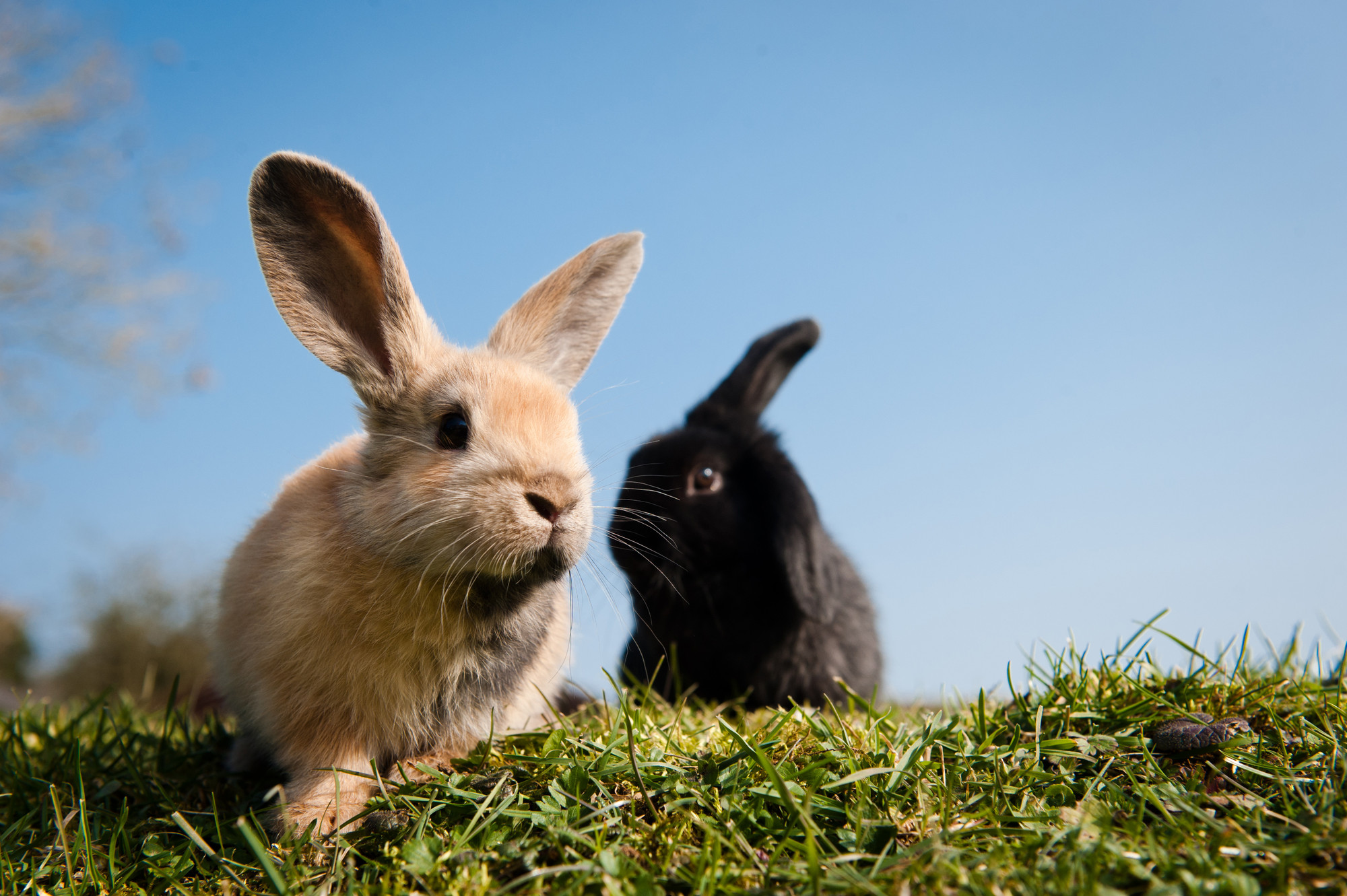 How to look after a rabbit   Behavioural tips   Blue Cross