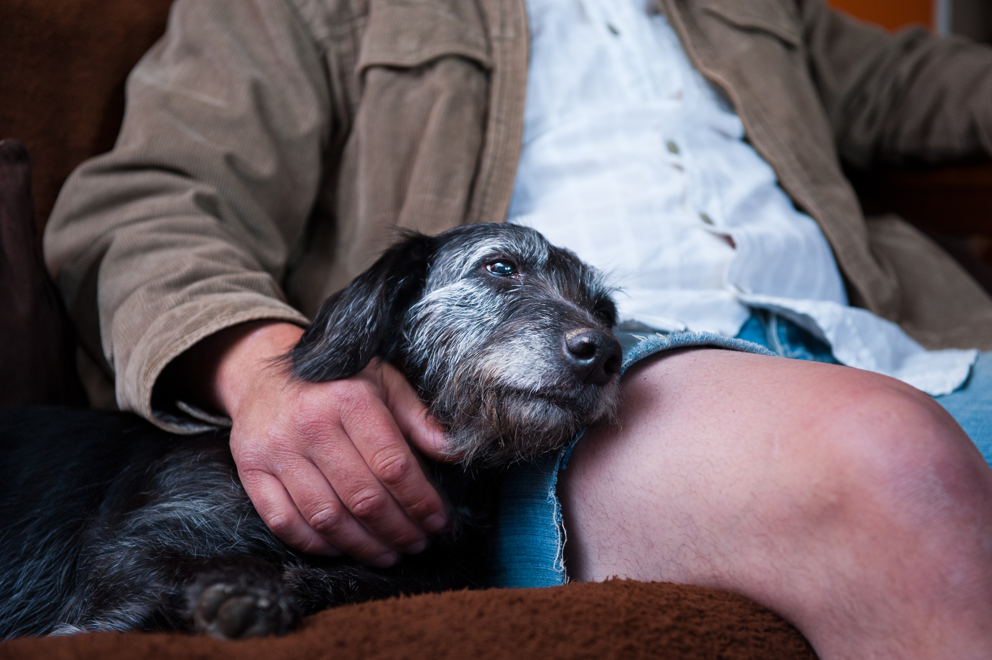 What should your dog first aid kit contain? | Blue Cross