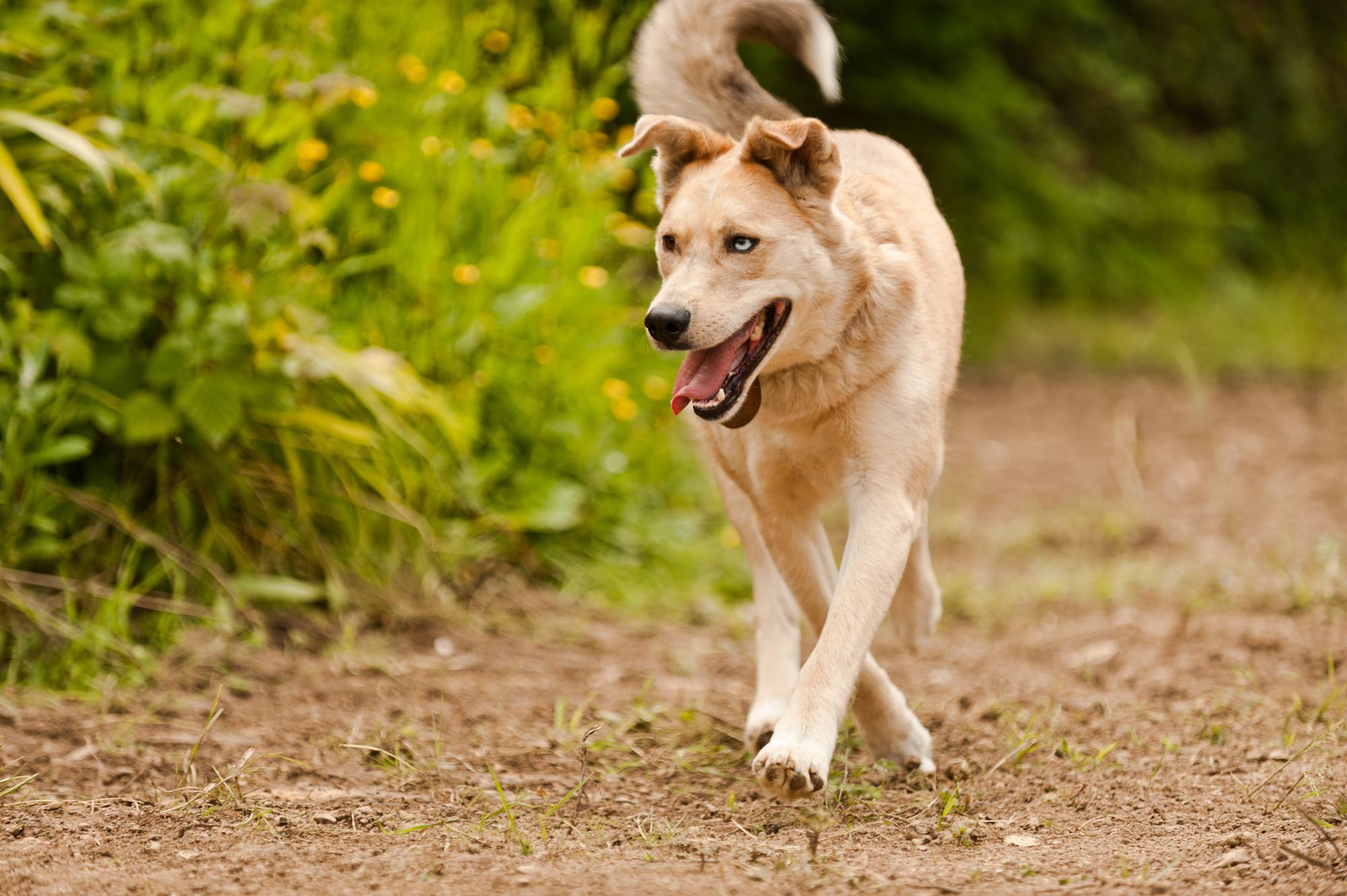 Treating Alabama Rot in Dogs | Blue Cross Advice