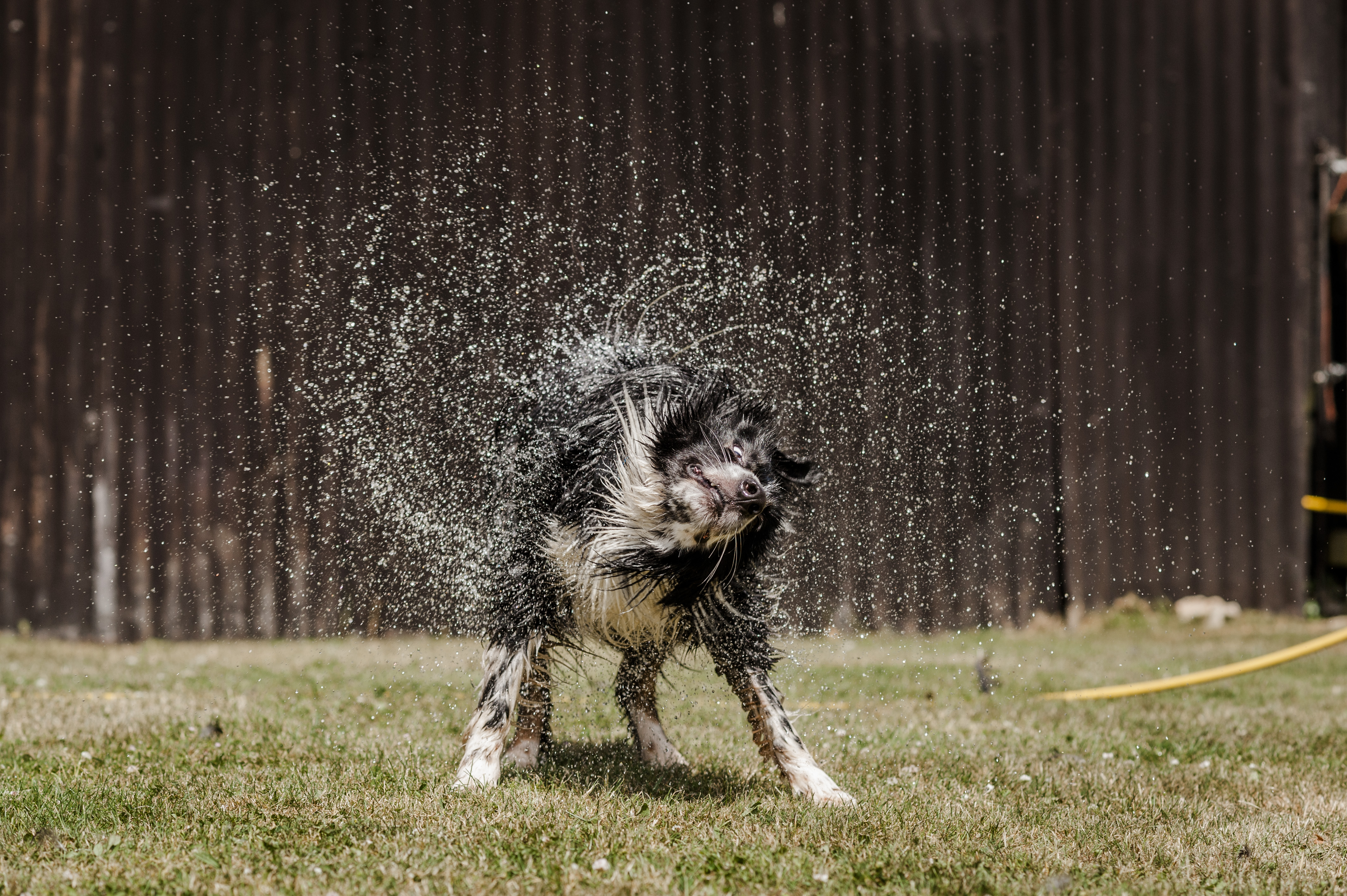 How to keep dogs cool in the summer heat | Blue Cross