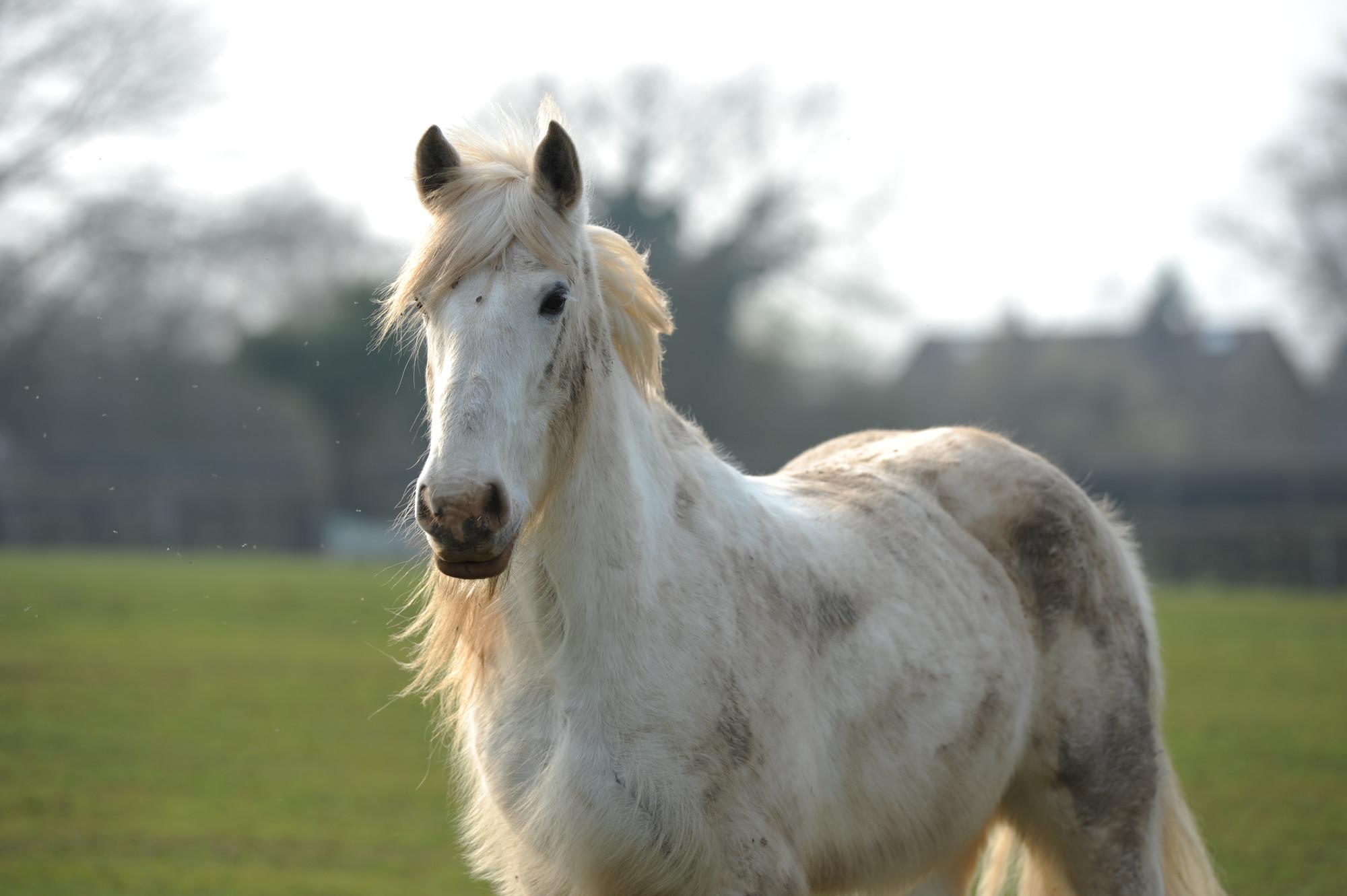 The field-kept horse   Horse grazing   Blue Cross
