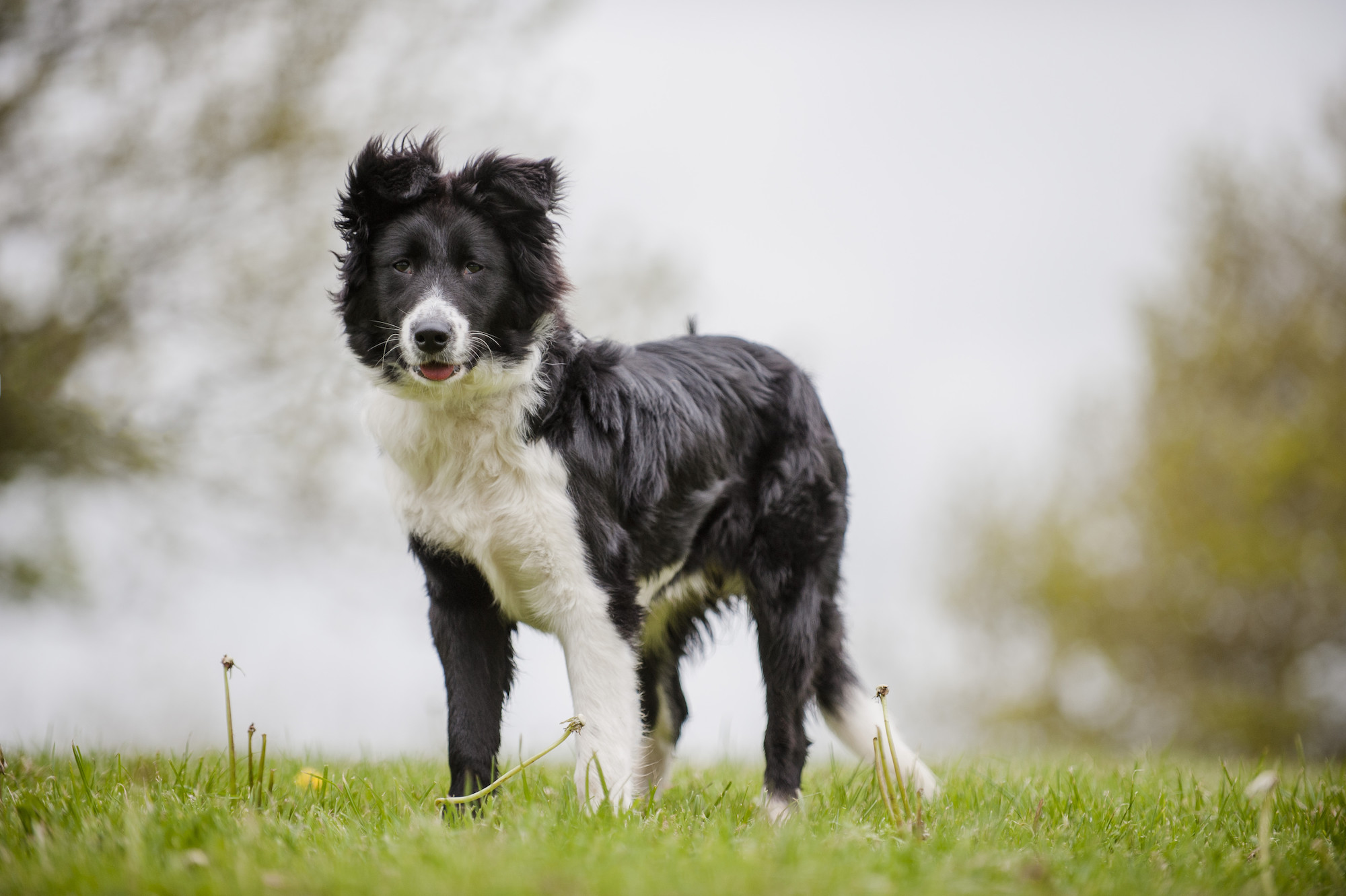 Missing and Stray Dogs | Lost or Found a Dog? | Blue Cross