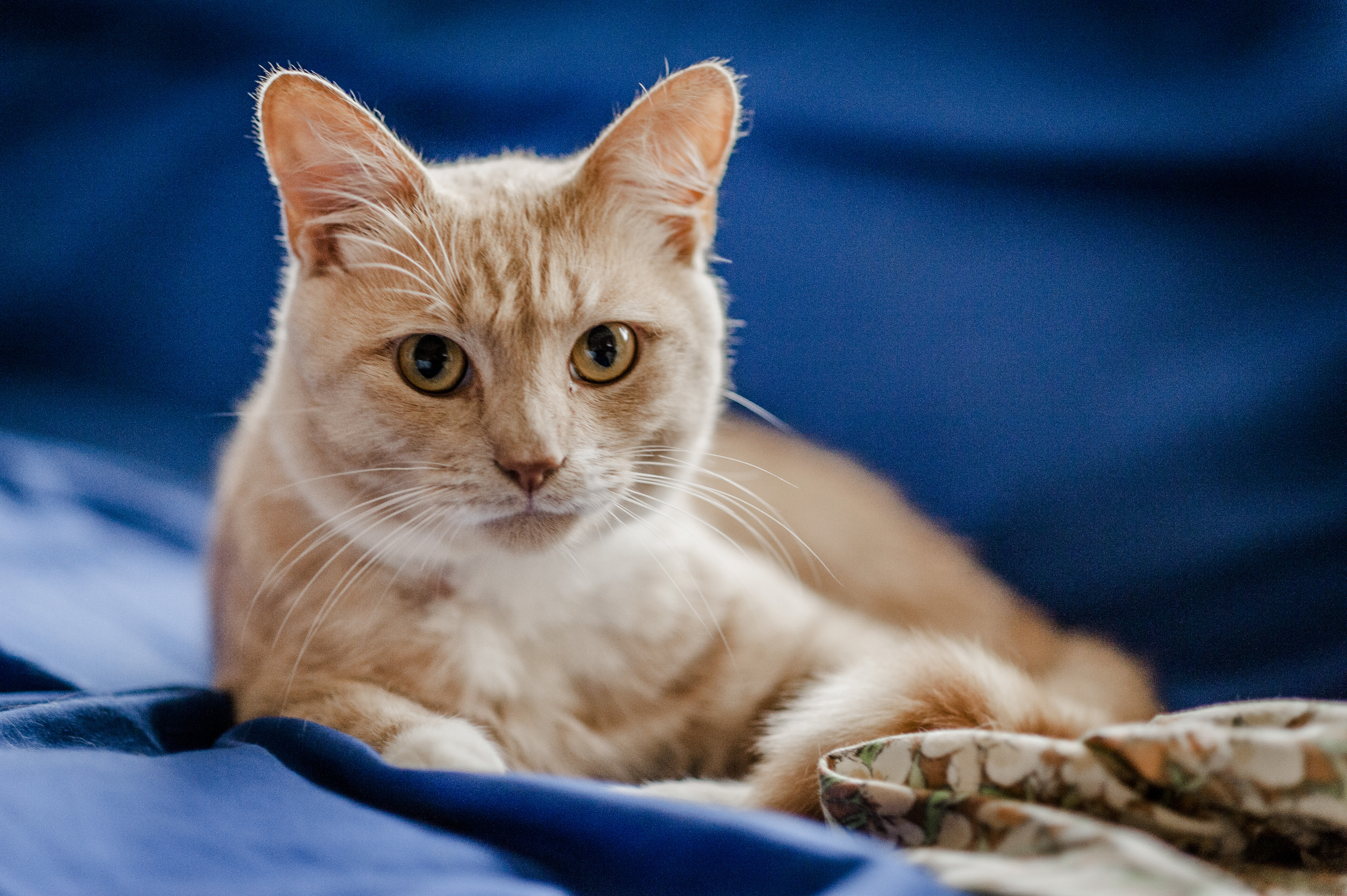Caring for a cat with asthma | Feline asthma | Blue Cross