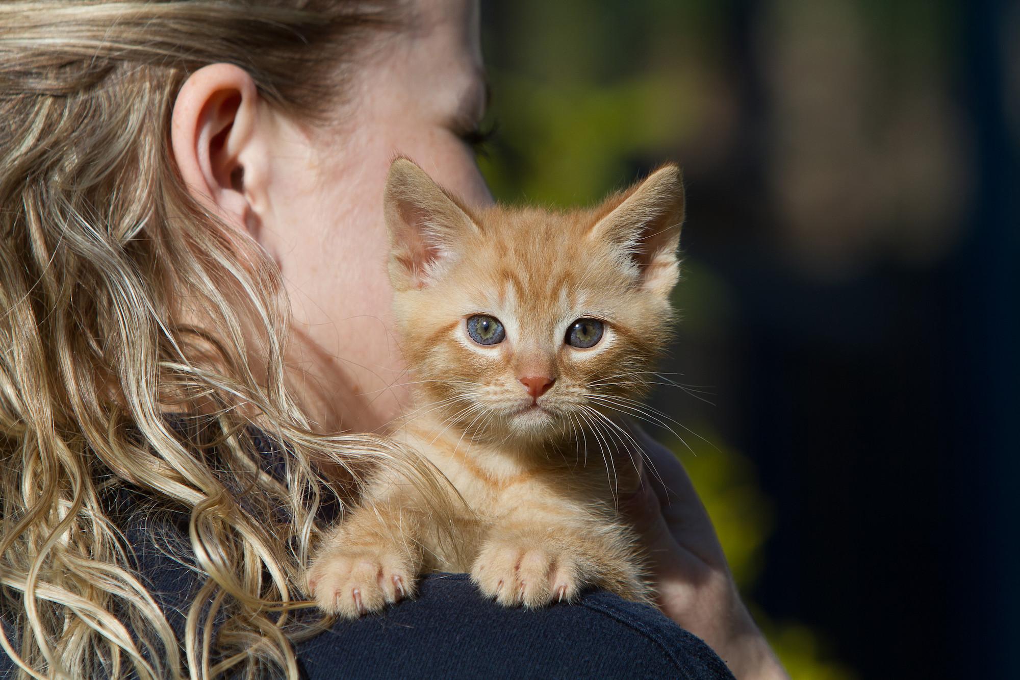 Cystitis in Cats | Feline idiopathic cystitis | Blue Cross