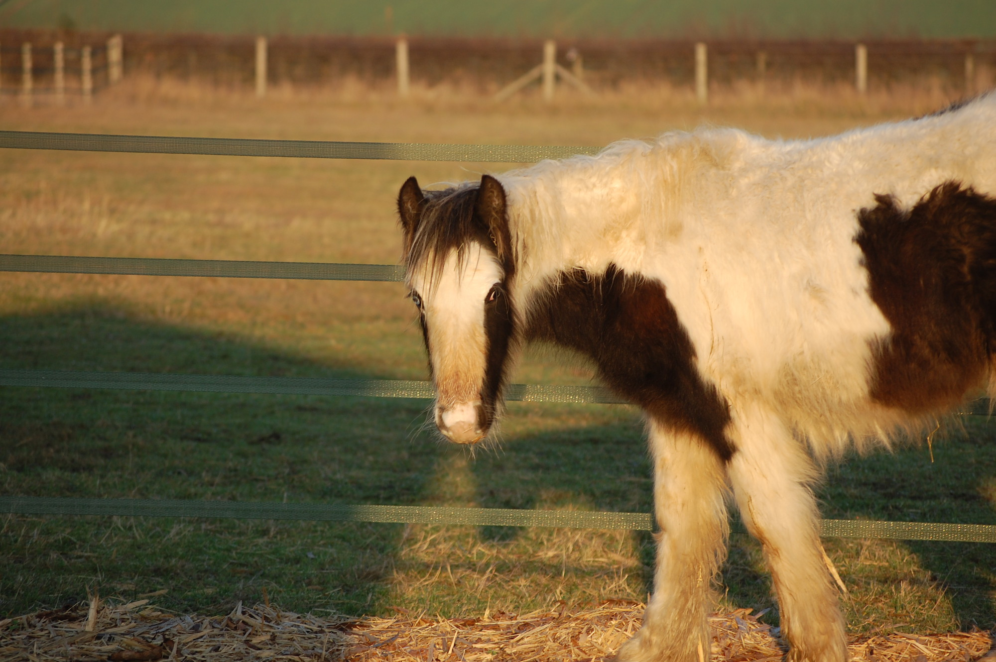 Caring for an Older Horse | Blue Cross