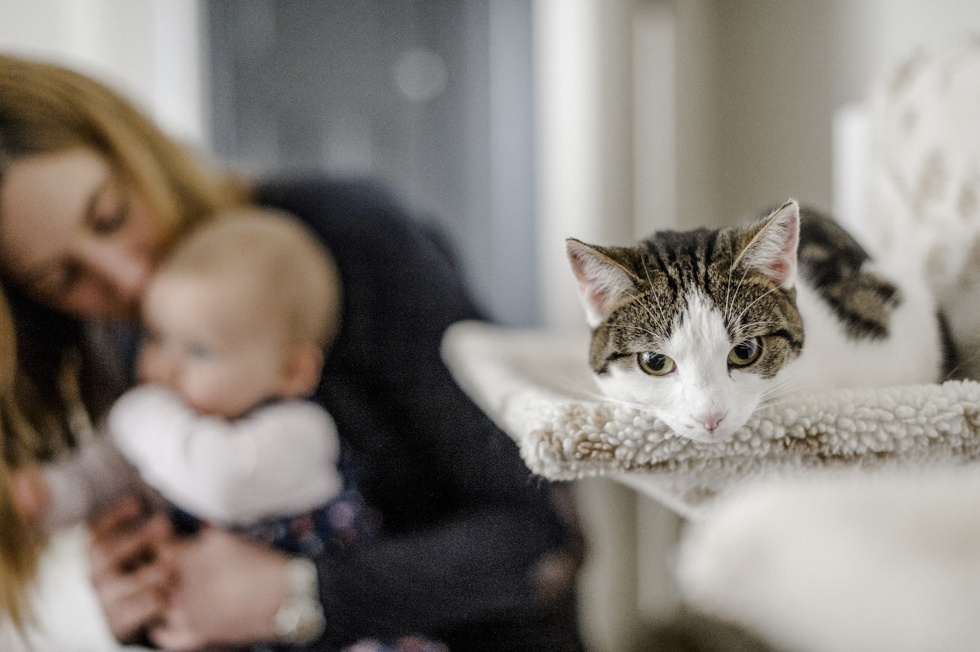 How to introduce your cat to your baby | blue Cross