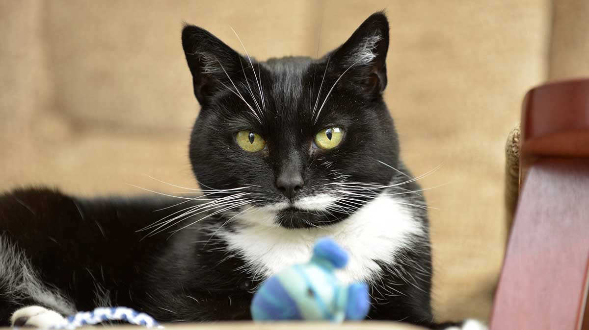 Common cat poisons and toxins | Blue Cross