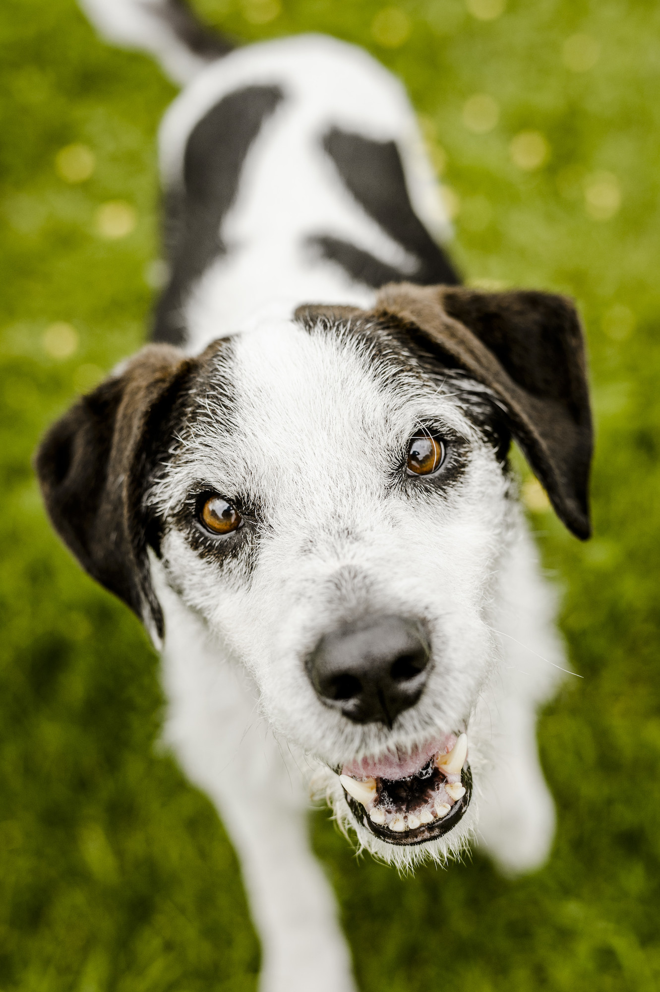Kidney Disease And Renal Failure In Dogs Blue Cross