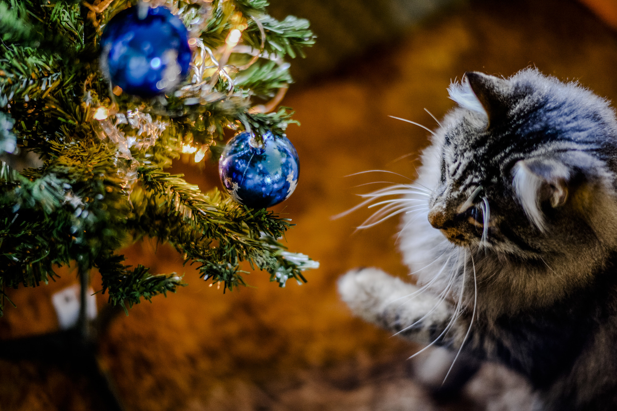 Cat Christmas.Keep Your Cat Safe At Christmas Blue Cross