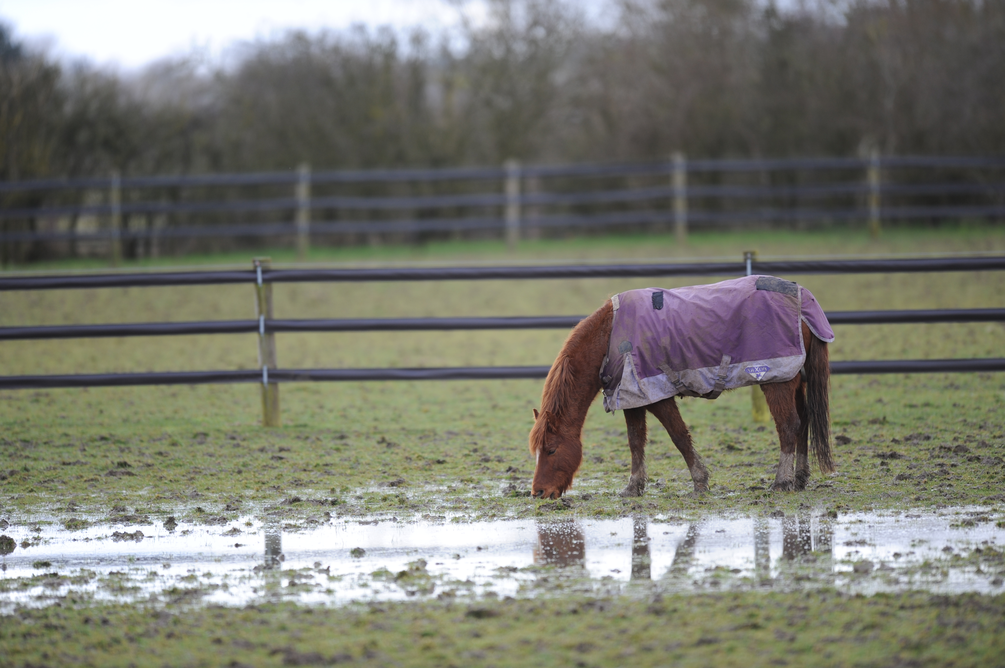 Guide Dog Rehoming >> Horse wet weather survival guide | Blue Cross