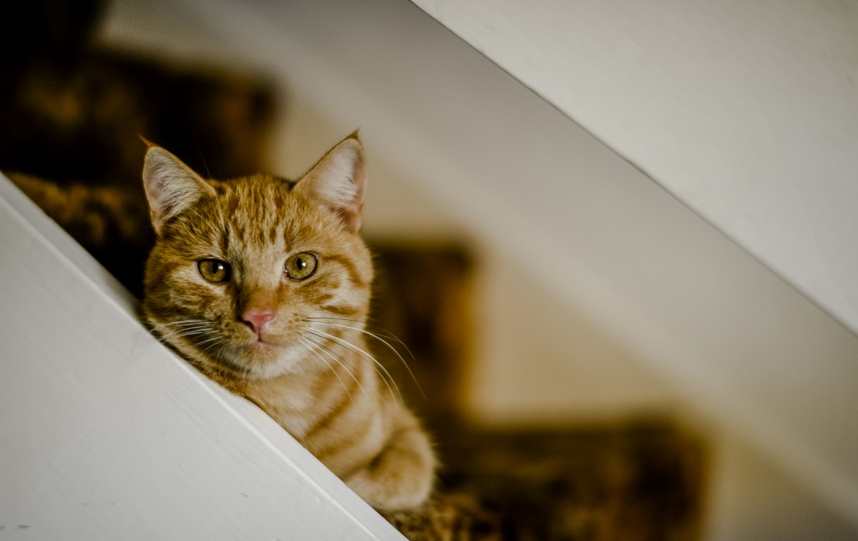 Cat grief | How to help a grieving cat | Blue Cross