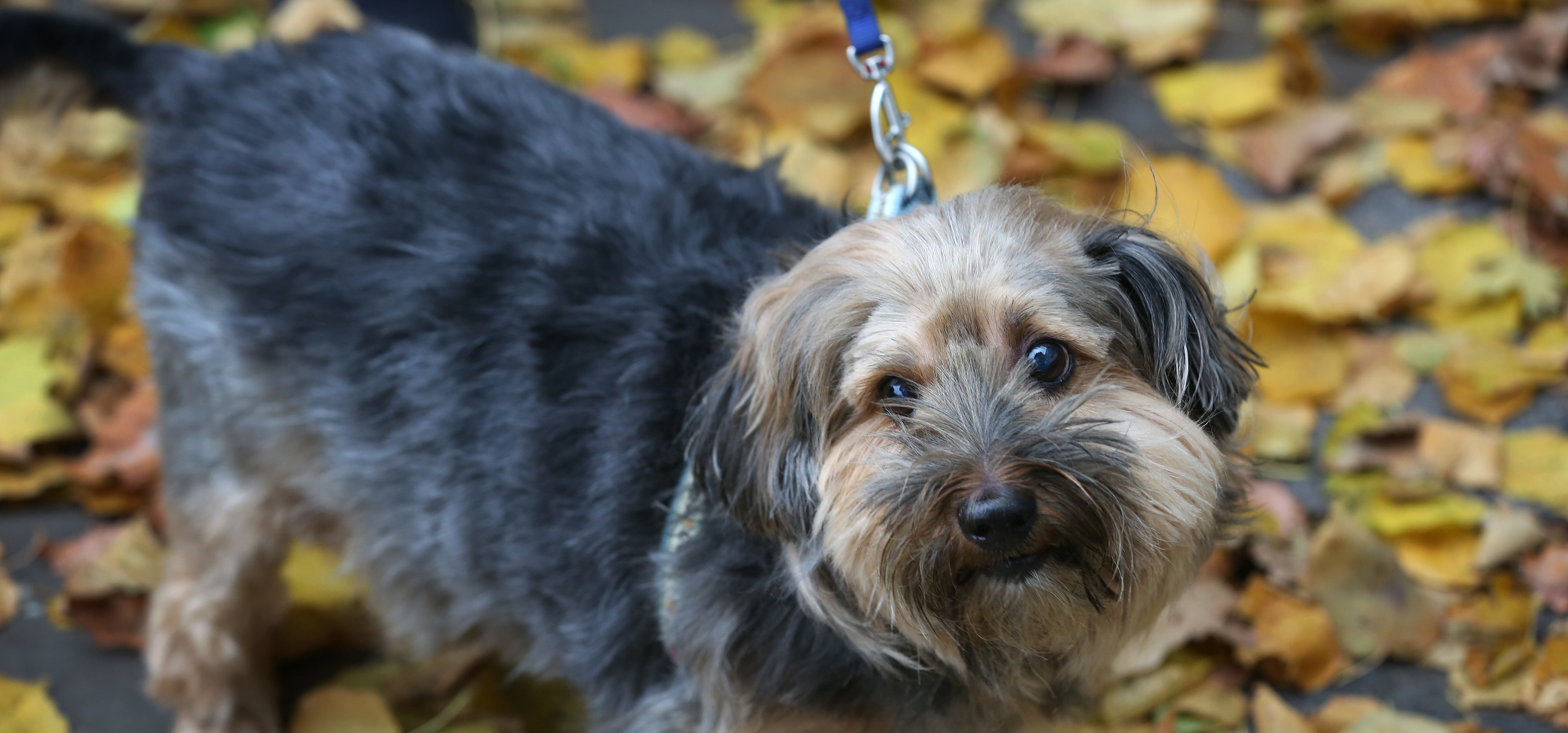 Are conkers poisonous to dogs? | Blue Cross