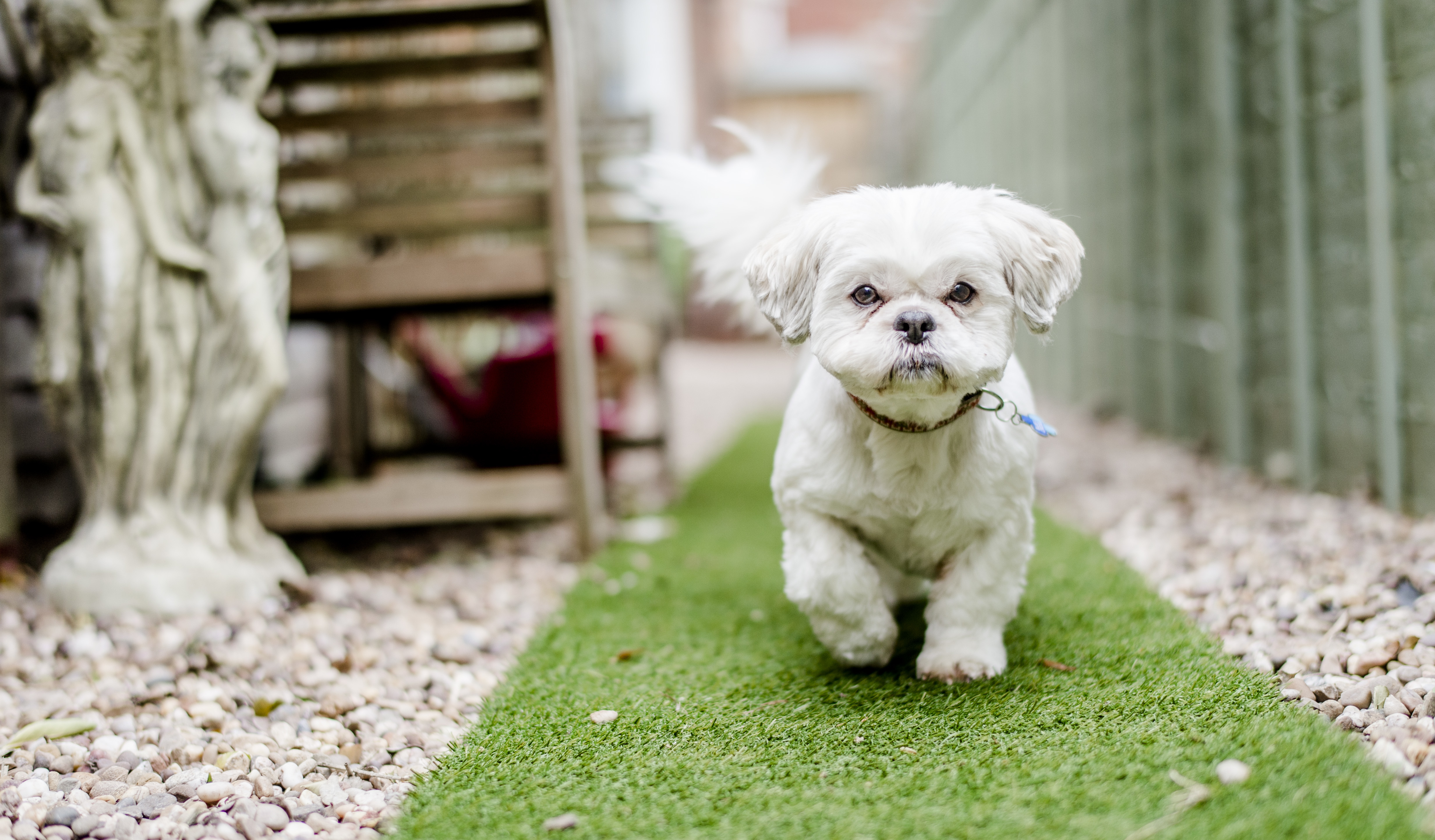 How to stop your dog barking | Blue Cross