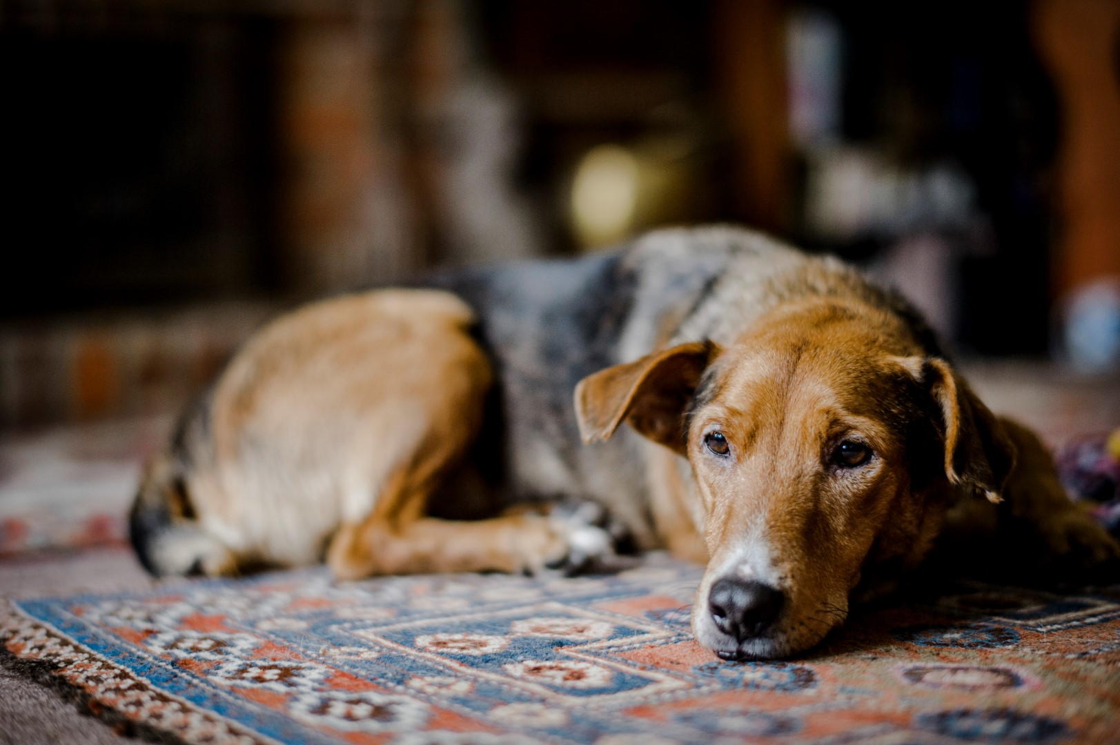 How to help a grieving dog | Blue Cross