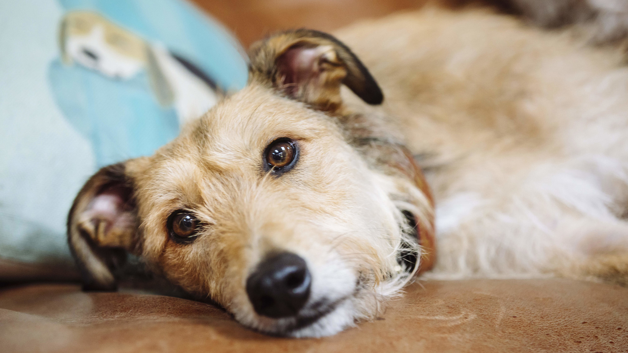 Why has my dog been sick? | Blue Cross