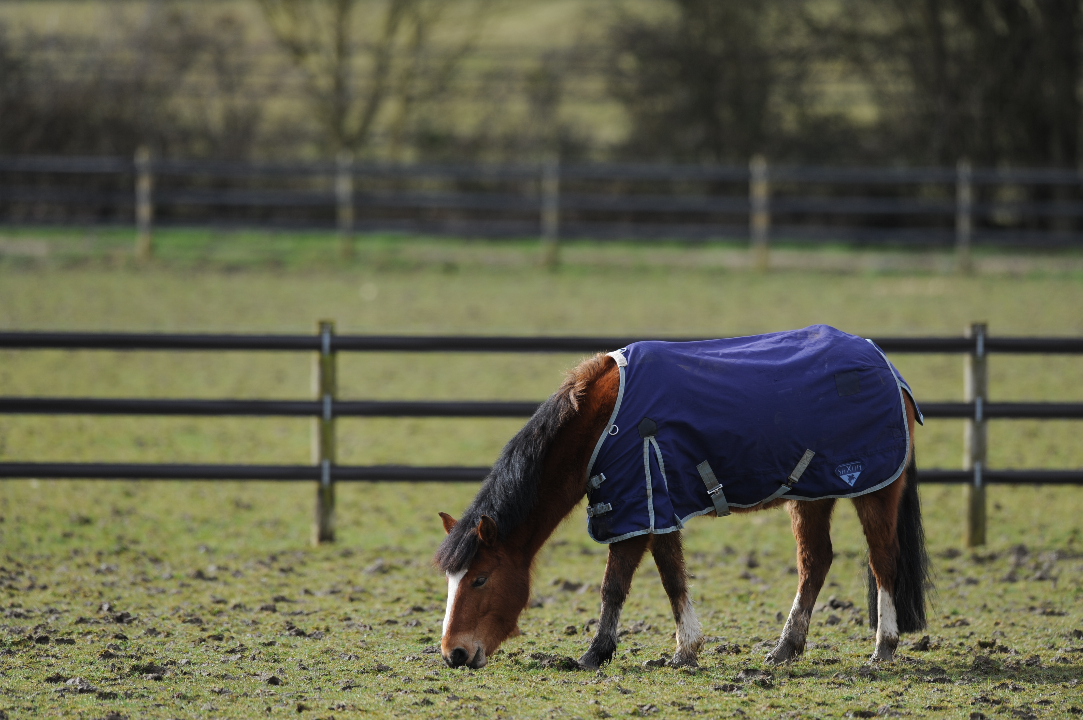 How To Rug A Horse Blue Cross