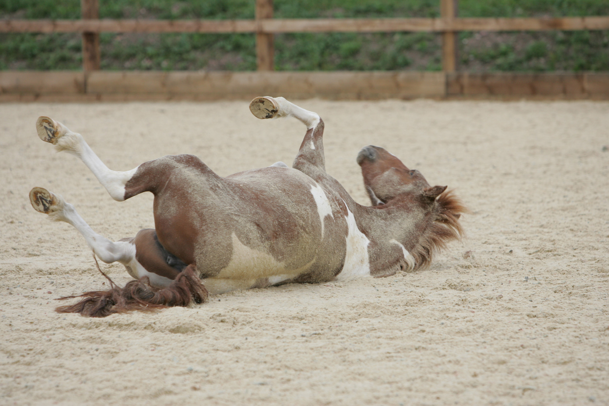 Horse colic prevention and management | Blue Cross
