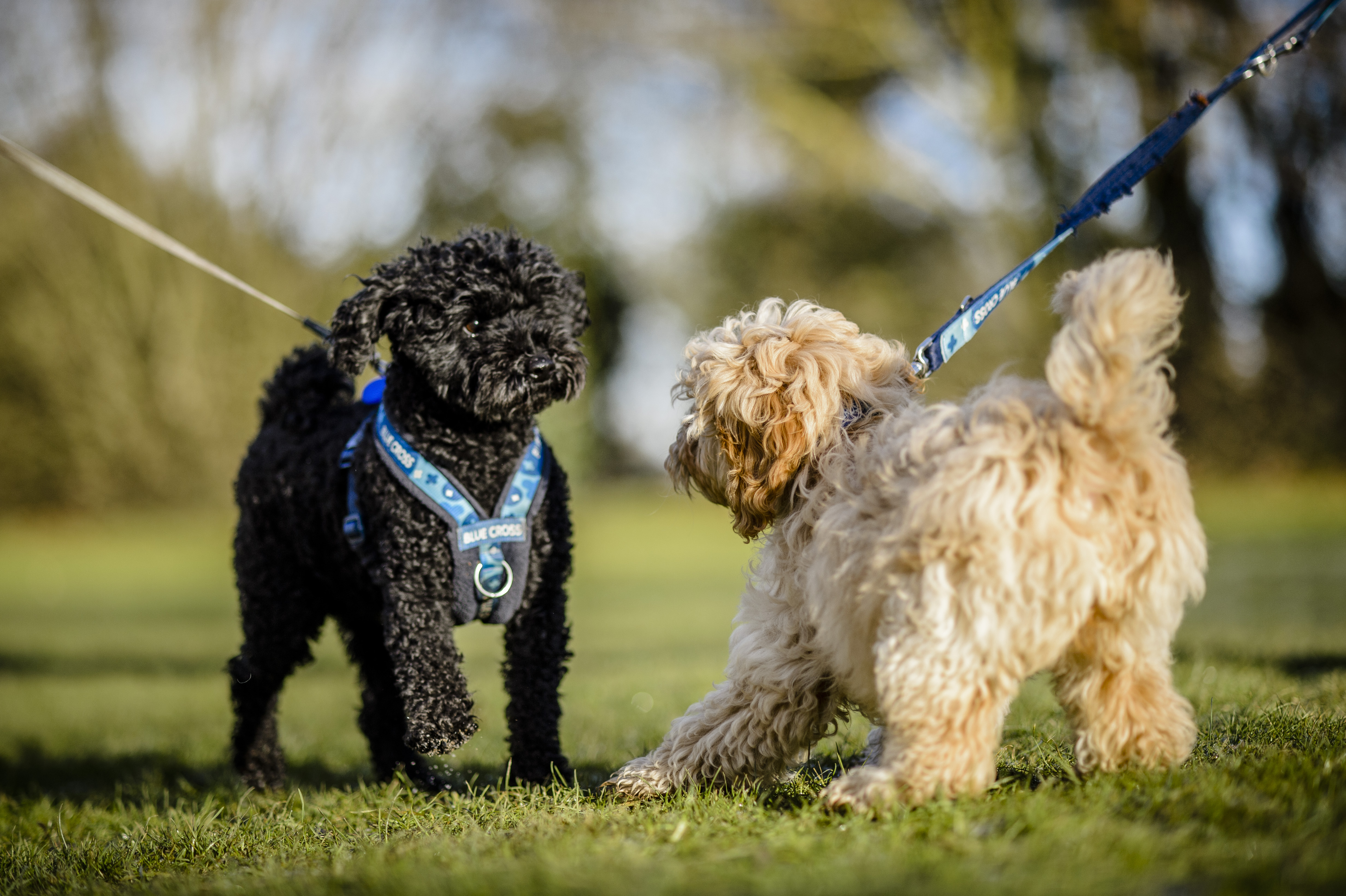UK dog laws all owners should know | Blue Cross