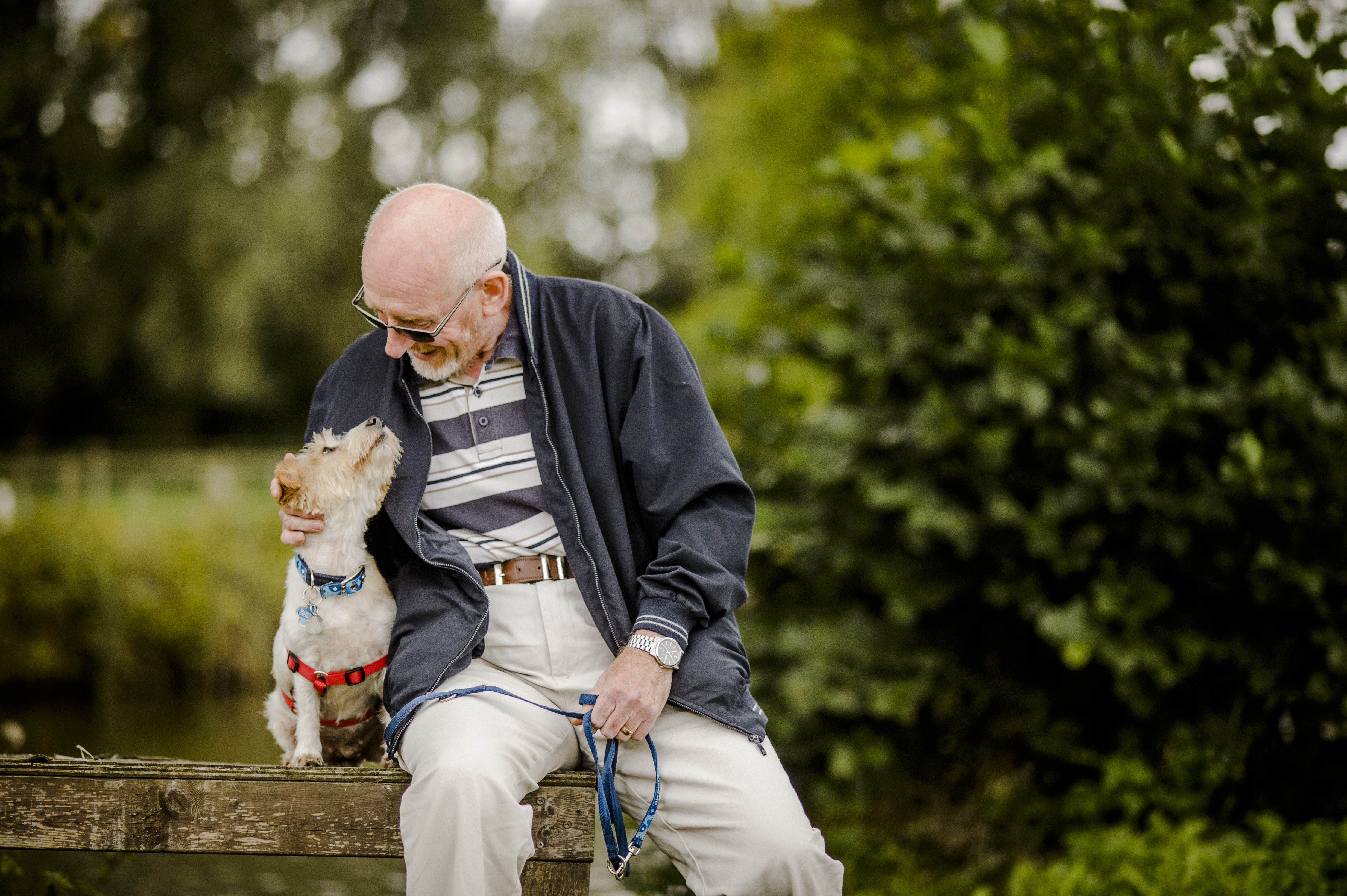 UK dog laws all owners should know   Blue Cross