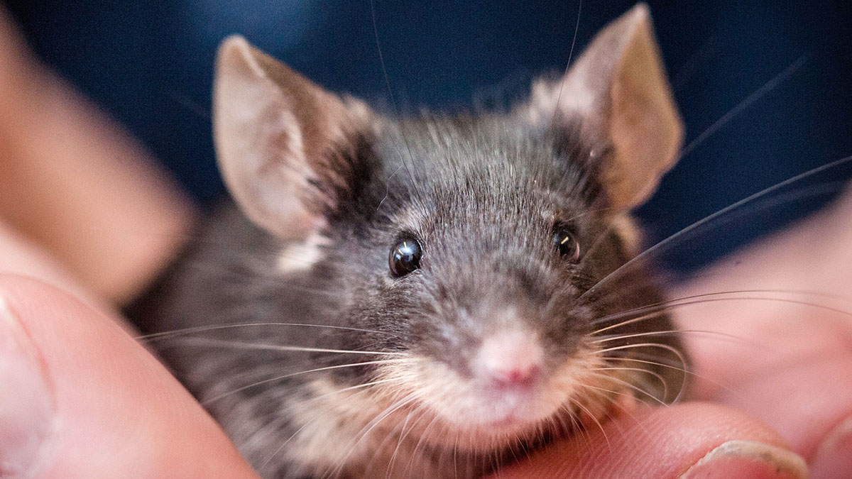 Caring for your pet mouse | Blue Cross