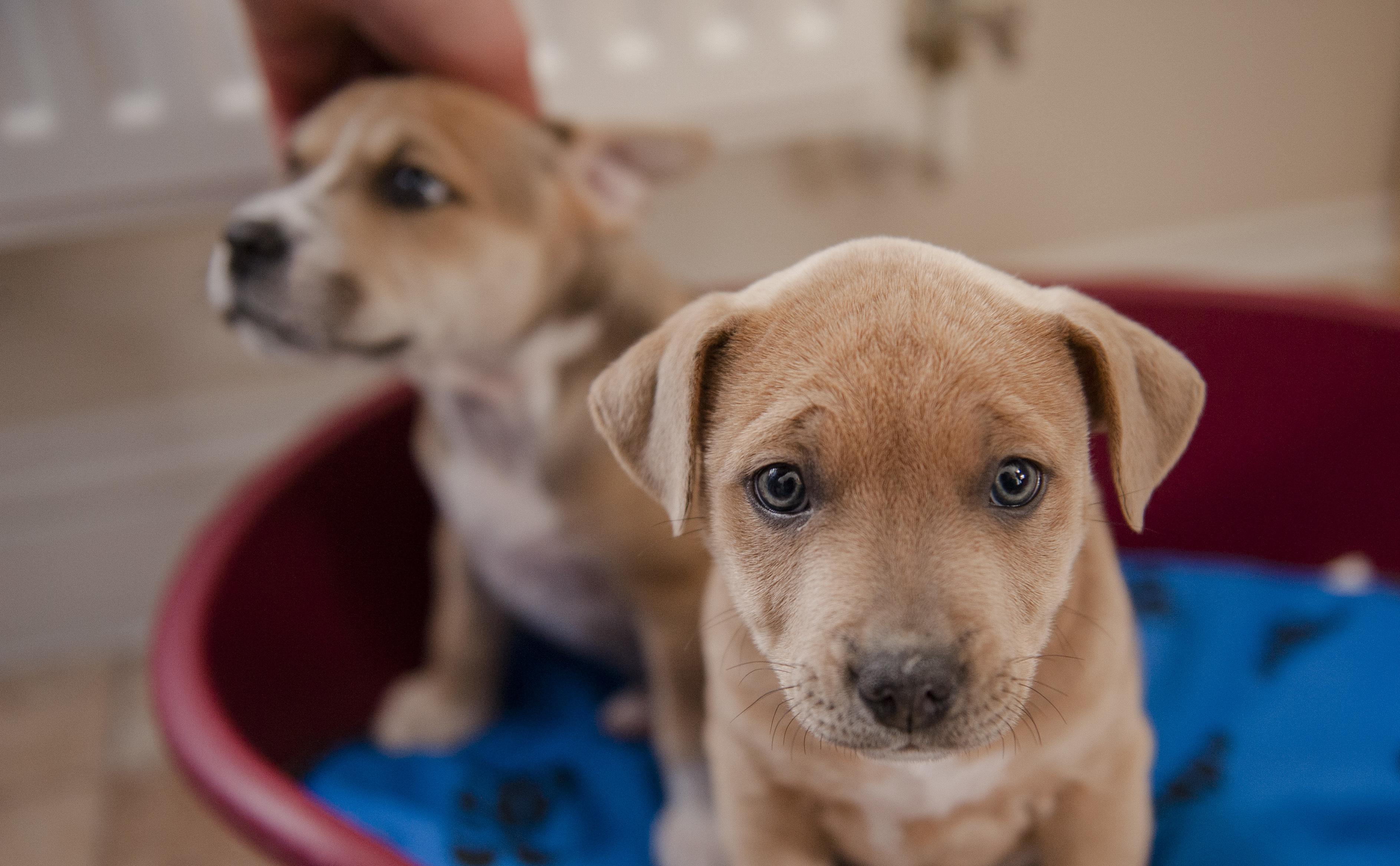 Canine Parvovirus | Symptoms and Treatment | Blue Cross