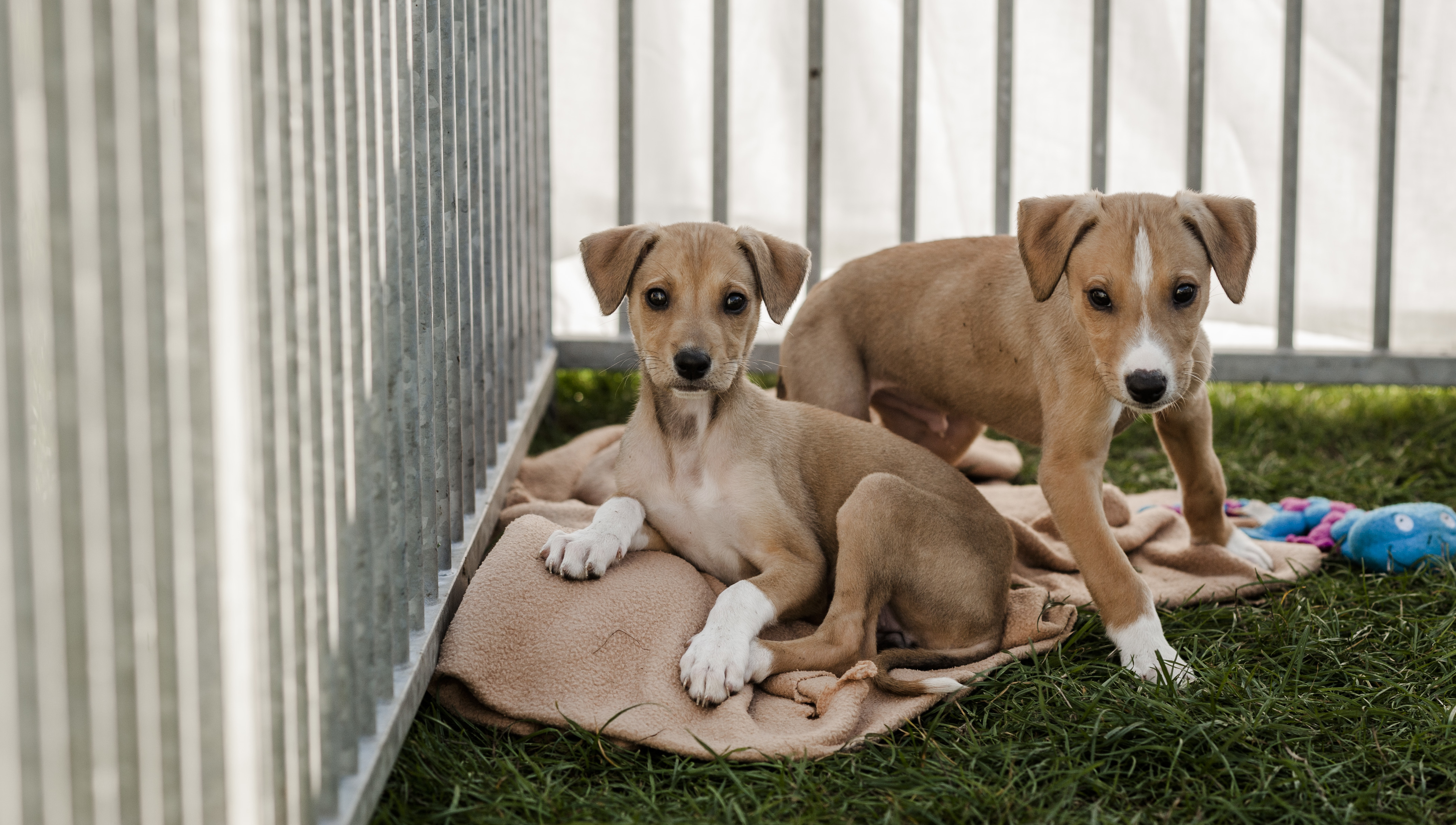 Buying a puppy | How to buy a puppy responsibly | Blue Cross