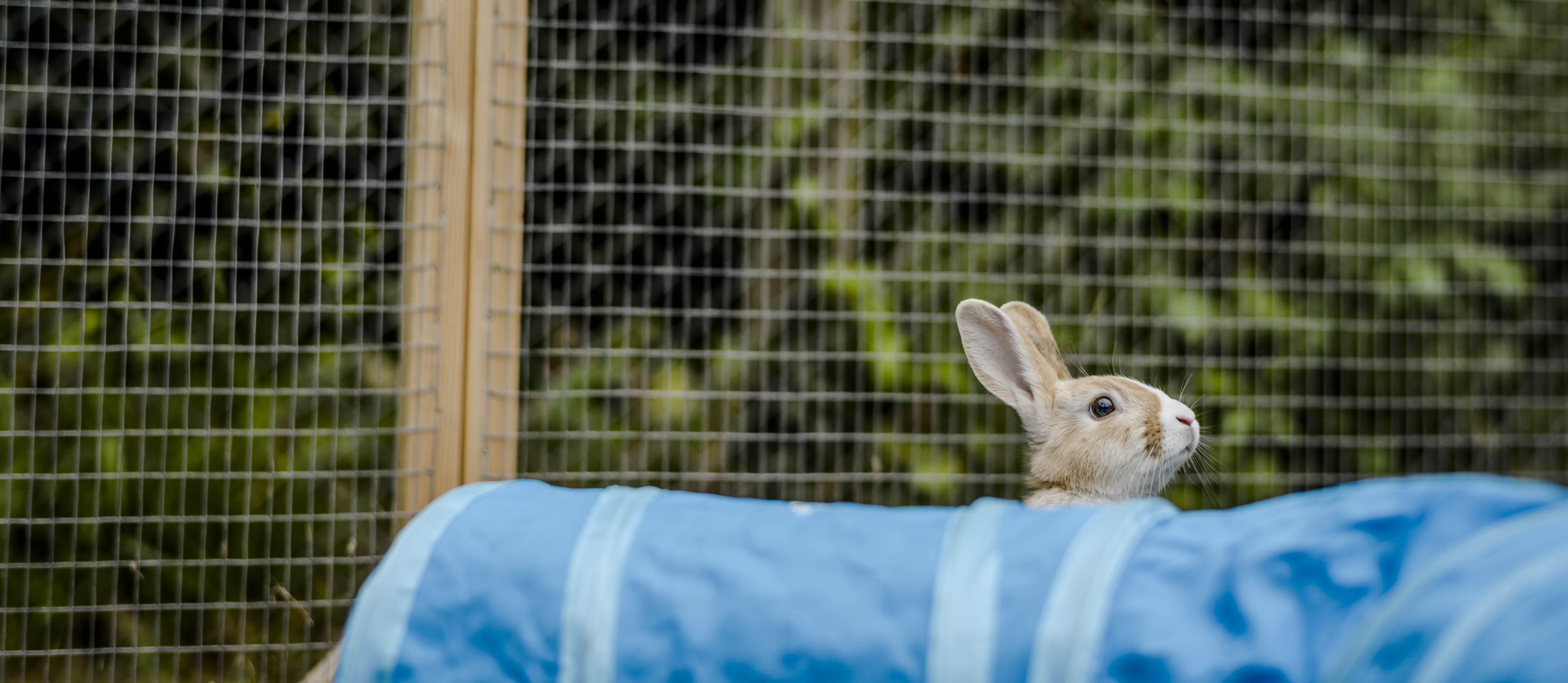 15 rabbit facts you probably didn't know! | Blue Cross