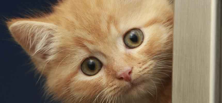 Basic First Aid for Cats | Blue Cross