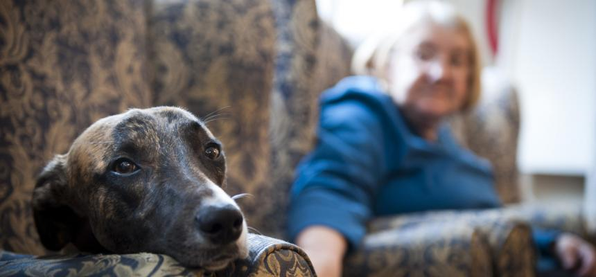 Cancer In Dogs Symptoms And Treatment Blue Cross