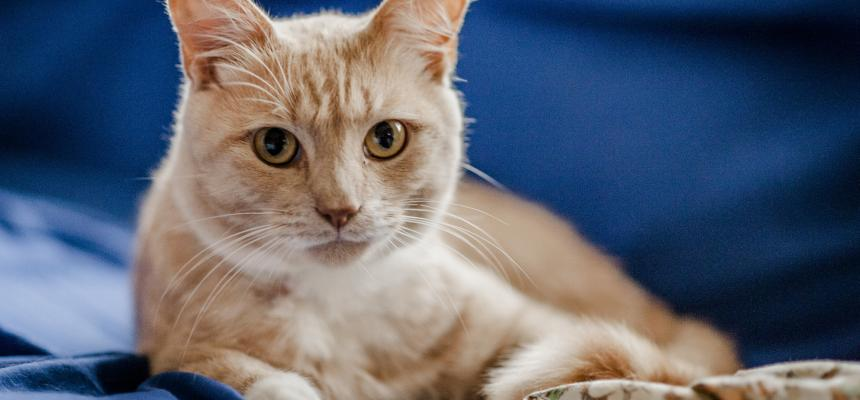 Cat Flu   Symptoms, Causes, and Treatment   Blue Cross