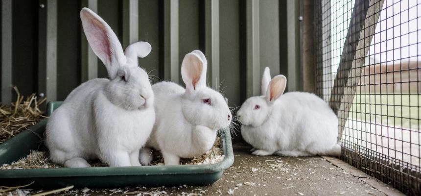 Housing And Companionship For Your Rabbits Blue Cross