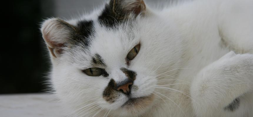 Coping with cat cancer | Symptoms and advice | Blue Cross