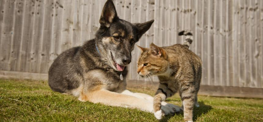 How To Introduce Your Dog To Your Cat Blue Cross