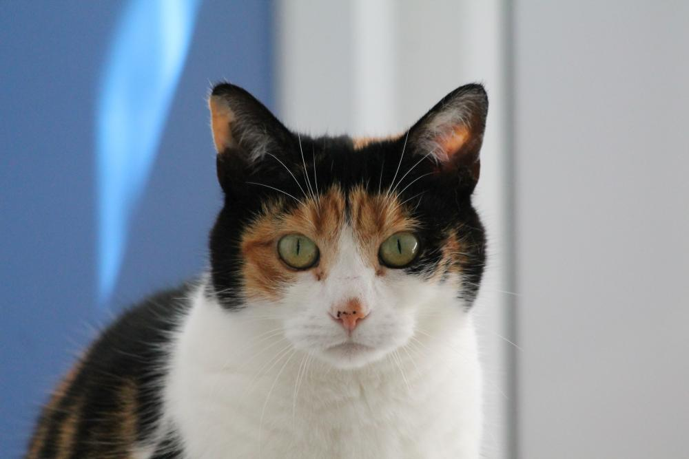 12 common cat myths debunked | Blue Cross