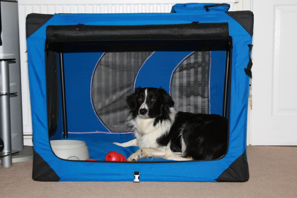How to house and toilet train puppies and dogs   Blue Cross