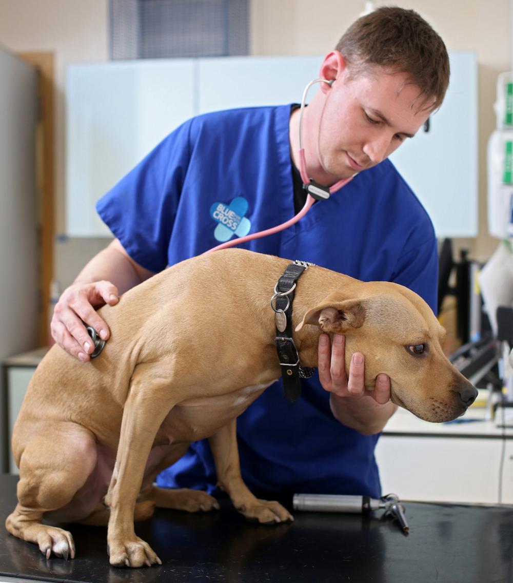 Diarrhoea in Dogs | Blue Cross