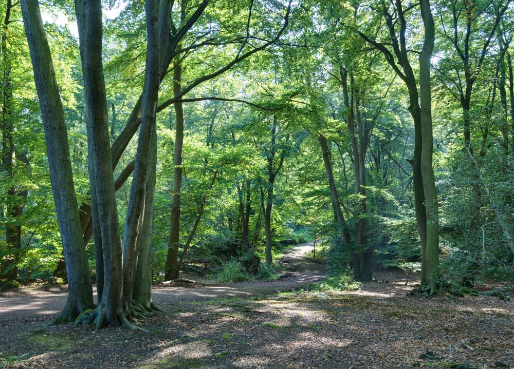 Epping Forest