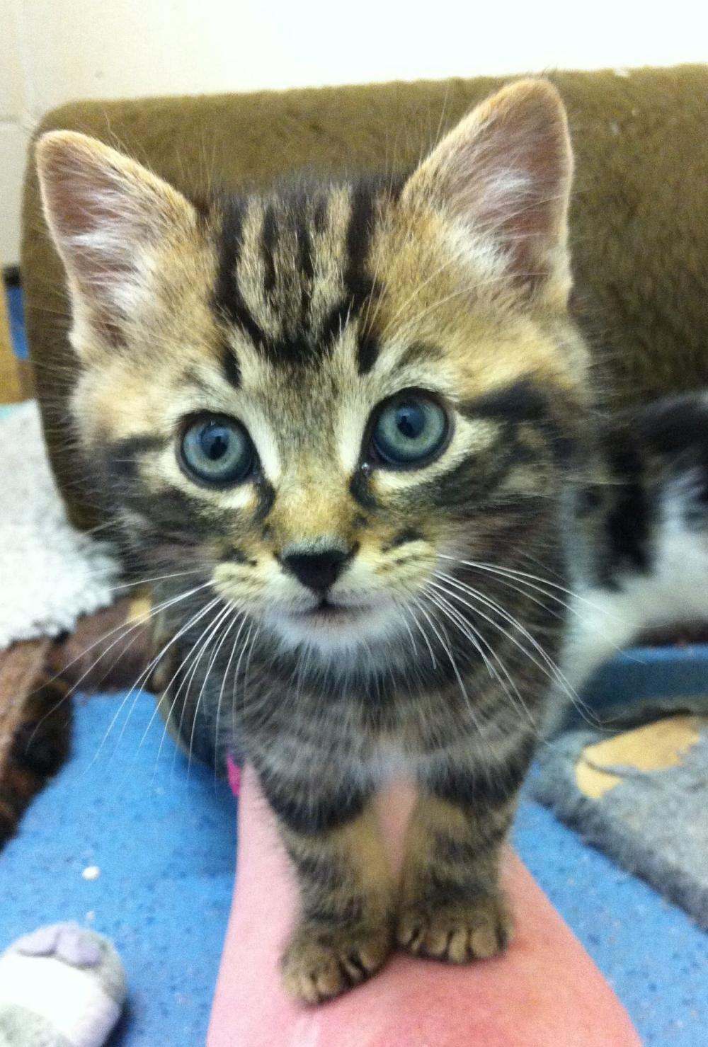 Kitten Lewis is hoping he'll be zooming off to a new home soon