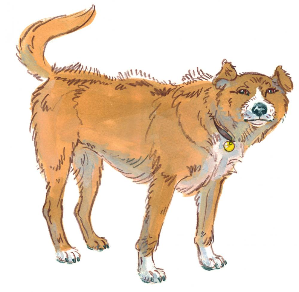 Drawing of a dog standing his ground and looking tense