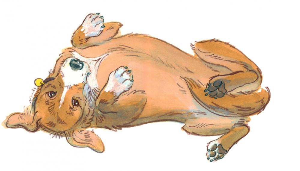 Drawing of a dog rolling over onto his back because he is feeling vulnerable