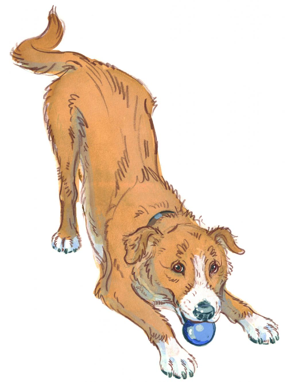 Drawing of a dog in a play bow pose looking happy and ready to play