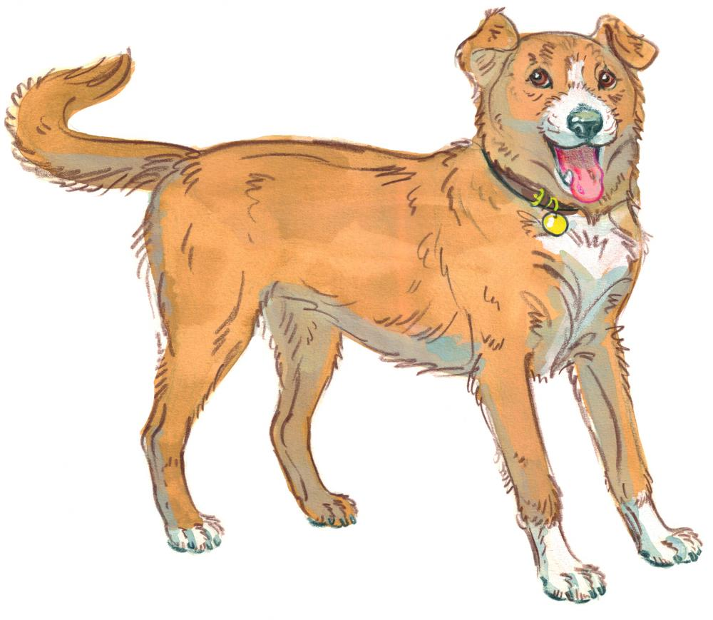 Drawing of a dog wagging her tail in excitement, happy to see you