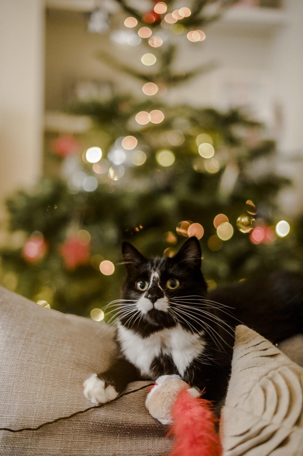 Ivy At Christmas
