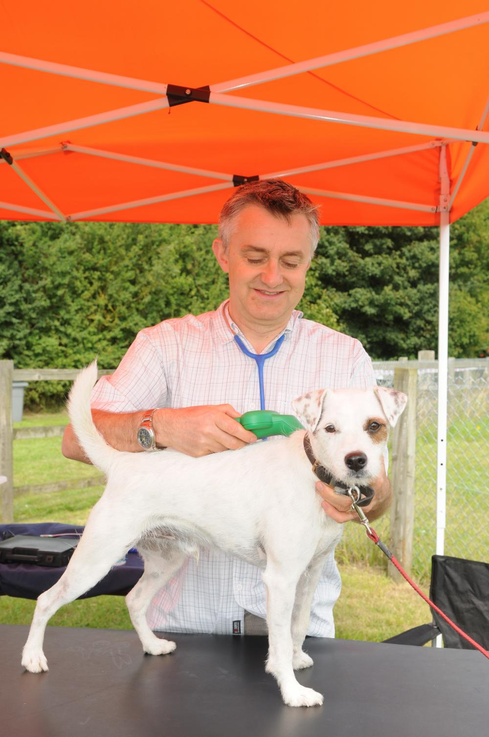 A Parsons Russell Terrier is scanned for a microchip