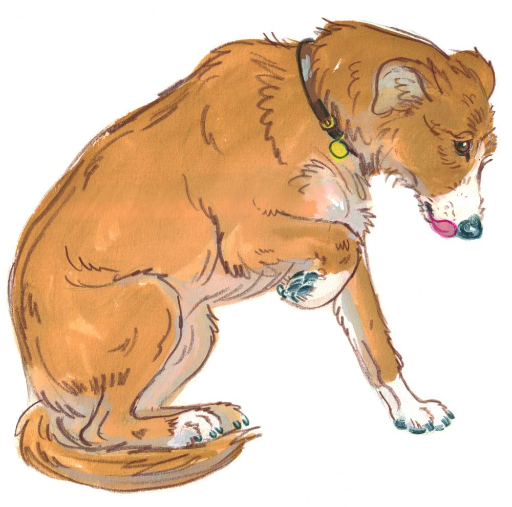 Drawing of a dog lifting her paw and licking her lips to show she is unsure