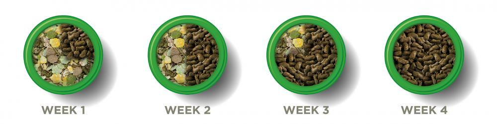 Image shows four food bowls, from weeks one to four stating at week one on the left. Week one is three quarters muesli and one quarter pellets, week two is half and half, week three is three quarters pellets and one quarter muesli, and week four is all pellets