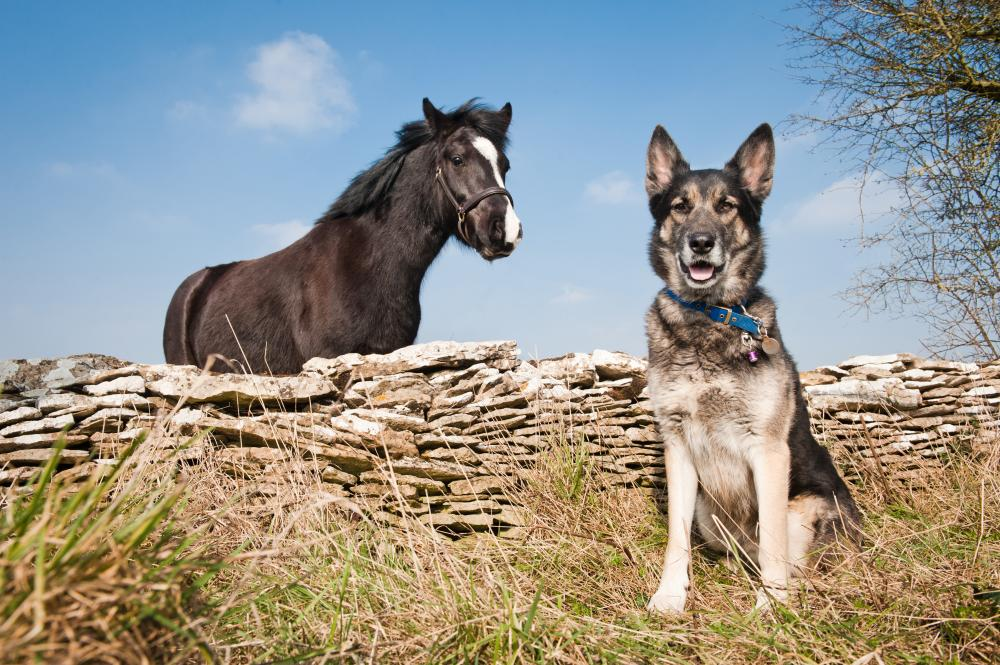 Horse and dog at Burford Rehoming Centre